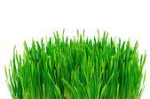 Groen gras geïsoleerd op witte achtergrond — Stockfoto