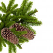 Branch of Christmas tree with cones isolated on white — ストック写真