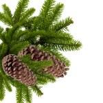 tak van kerstboom met kegels geïsoleerd op wit — Stockfoto