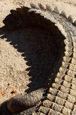 Close up on a Nile crocodile — Stock Photo