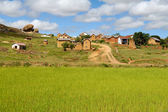 Rice paddy field in Madagascar — Stock Photo