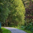 Winding path in woodlands — Stock Photo #7542952
