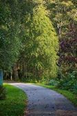 Winding path in woodlands — Stock Photo