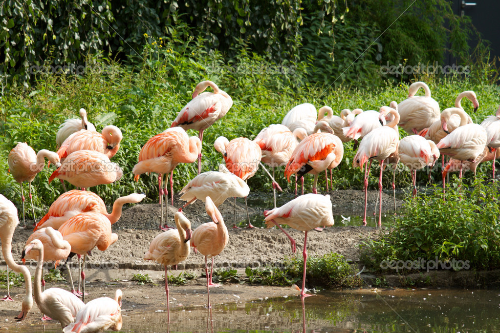 Flamingo in Berlin Zoo — Stock Photo #6818073