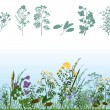 Vector de stock : Herbs in meadow
