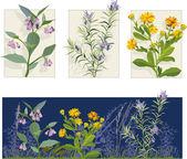 Medicine Herbs — Stock Vector