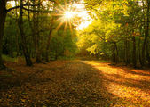 Sunshine through the autumn forrest — Stock Photo