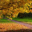 Indian summer-21 — Stock Photo