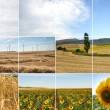 Wind turbines in sunflowers field — Stock Photo