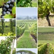 Vines and vine shoots - Stockfoto