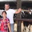 A couple of farmers behind cows — Stock Photo