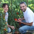 Couple gardening — Stock Photo #7548807