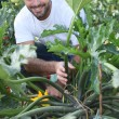 Man kneeling by vegetable in garden - Photo