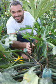 Man kneeling by vegetable in garden — Foto de Stock