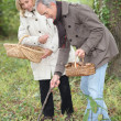 Middle-aged couple gathering mushrooms — Stock Photo