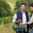 Royalty-Free Stock Photo: Couple of wine-growers at harvest time