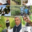 Wine production collage — Stock Photo