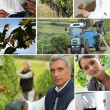 Wine production collage - Stock Photo