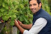 Hombre que trabajaba en un viñedo — Foto de Stock