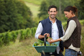 Couple of wine-growers at harvest time — Stock Photo