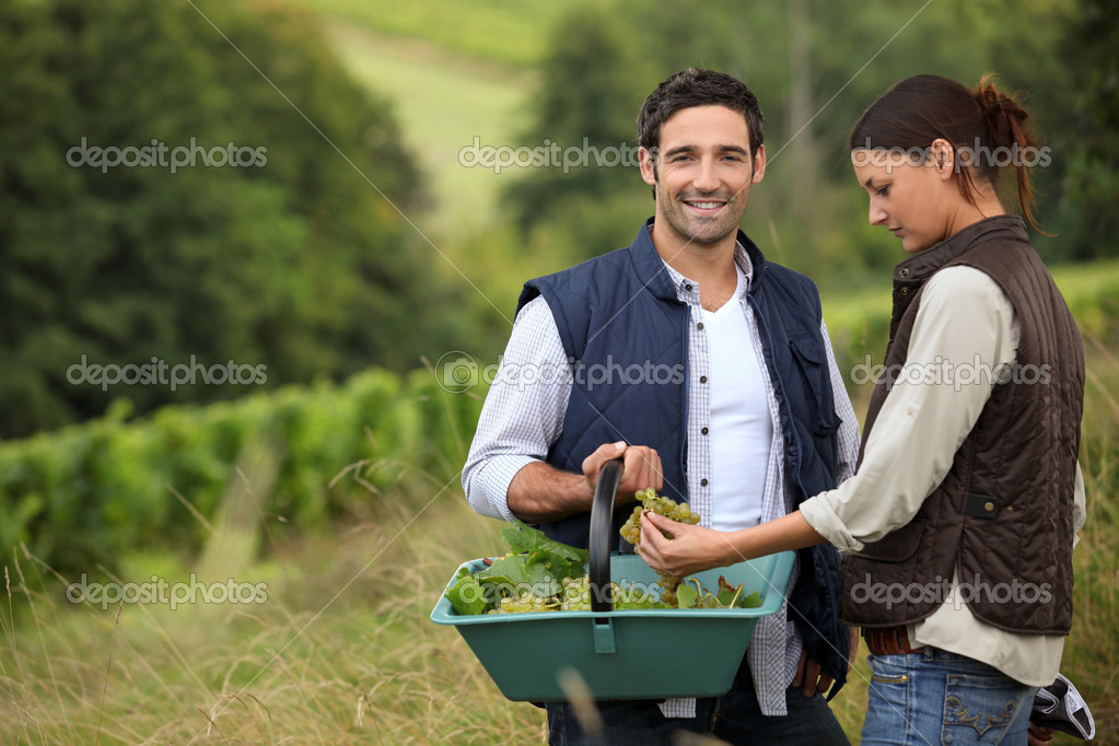 Couple of wine-growers at harvest time — Stock Photo #7608336