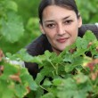 Woman in vineyards - Stockfoto