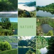 Collage of green landscapes - Stock Photo