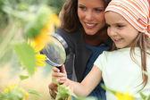 Dívka při pohledu na slunečnice — Stock fotografie