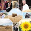 Farm mosaic - Stock Photo
