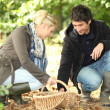 Couple gathering mushrooms - Stock Photo