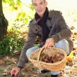 A mature man picking chestnuts. — Stock Photo