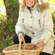 Woman gathering mushrooms in garden - Stockfoto