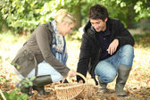 Couple gathering mushrooms — Stock Photo