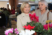 Women looking at plants in a market — Stock Photo