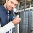 Stock Photo: Young wine producer