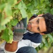 Close-up of a wine-grower — Stock Photo