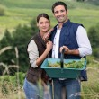 Stockfoto: Couple picking grapes