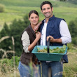 Foto de Stock  : Couple picking grapes