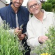 Young man and elderly woman gardening — Stock Photo