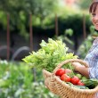 Stockfoto: Womin her vegetable garden