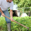 Man gardening — Stock Photo #7677575