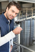 Young wine producer — Stock Photo