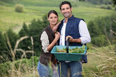Couple picking grapes — Stockfoto