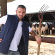 Farmer stood in front of cows — Stock Photo #7691348