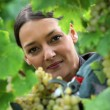 Photo: Female wine producer cropping grapes