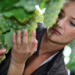 Woman inspecting green grapes in a vineyard — Stock Photo #7691499
