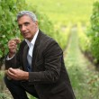 Stock Photo: Vineyard owner