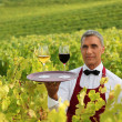 Waiter with glasses of wine on tray in vineyard — Stock Photo #7706899