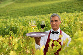 Waiter with glasses of wine on a tray in a vineyard — Stock Photo