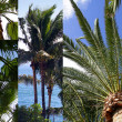 Stock Photo: Palms photomontage